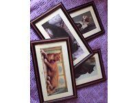 Framed Art Prints - Cats