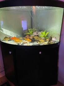 Fluval fish tank 190L corner with stand