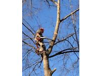 Tree & Garden Services-Landscaping-Fencing-Tree Surgery-Chainsaw Work-Hedge Shrub Trimming
