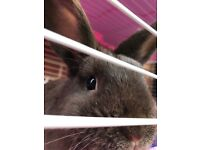 Rabbit & Cage.