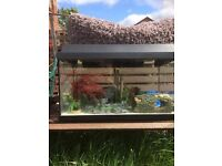 54L fish tank with gravel forsale