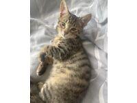 3 month kitten