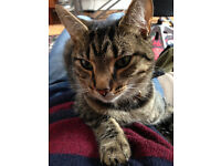 Desperately missing our tabby cat Penny from Crouch End since 2nd May.