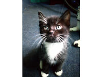 Beautiful male kitten looking for a loving home Ready to go from 10th June