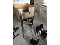 Puppy welping box and play pen
