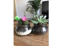 Cacti & Succulent Vintage jar plants with flower
