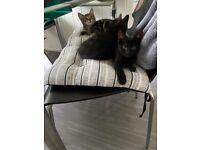 Kittens for sale Leeds