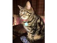 Beautiful cat seeks new home due to move