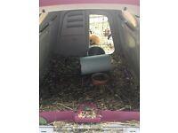 Eglu Go Guinea Pig/Rabbit Hutch