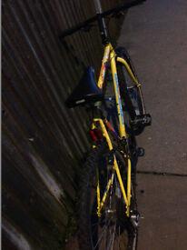 mountain bike Saracen yellow