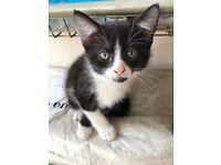 Last kitten still available updated at 18.20
