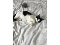 Kitten for sale, 11 weeks old very loving