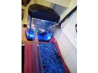 Fish tank with gravel, had tropical fish in it, selling due to an upgrade.
