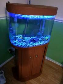 Fish Tank 70L FOR SALE! BARGAIN! FISH READY!