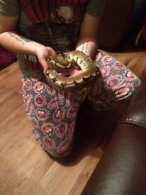 Snake collection £300 Ono