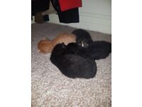 4 healthy kittens for sale