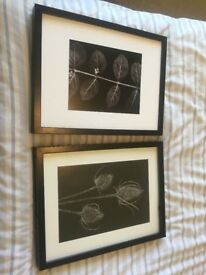 2 X RIBBA FRAMES, mounts & prints