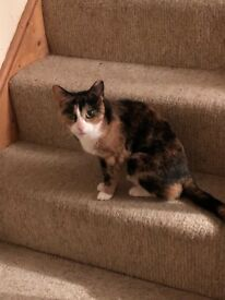 Beautiful tortishell cat looking for new home