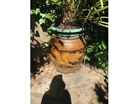 Beautiful large ornamental plant pot