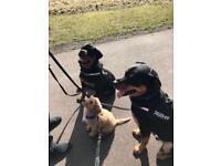 Dog walking and boarding