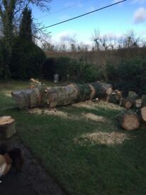 FREE FOR COLLECTION - Wood (Fir tree)