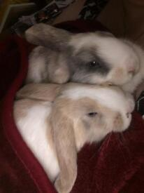 8 Month Old Bunnies