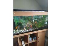 Fish tank all equipments + fish