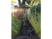 Friendly Gardening and Landscaping services - No job too small - Esher-Claygate-Surbiton-Kingston