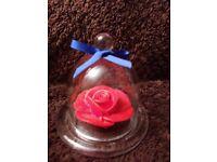 Mini bell jars