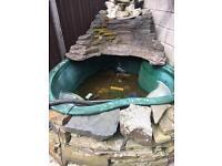 Pond set up