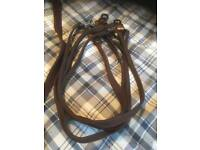 Quality leather dog leads and collars