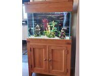 100litre solid oak cabinet aquarium