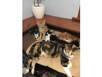 Lovely house reared kittens