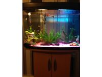 Tropical fish setup