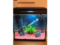 Tropical fish and fish tank