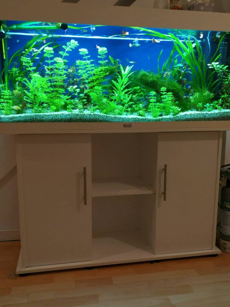 juwel rio 240 complete planted aquarium setup in white in beckton london gumtree. Black Bedroom Furniture Sets. Home Design Ideas