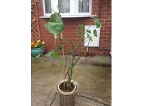 Plant on sale...