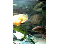Various tropical fish