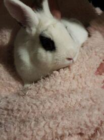 Female rabbit to good home