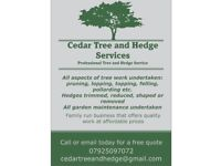 Cedar Tree and Hedge Services - Affordable Tree Surgeons