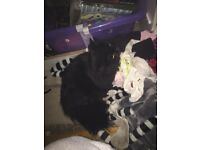 2 female cats need rehomeimg