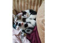 Three lovley kittens