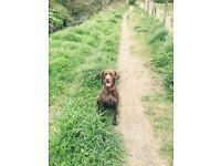 Dog/Puppy Training Socialisation Classes
