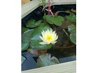 Pond Cleaning Dorset - Pond Maintenance,Pond Plants & Pond Supplies