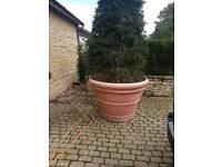 Plastic tree pots
