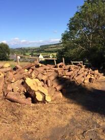 Large firewood logs
