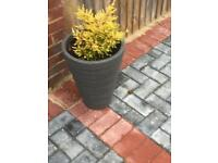4 x modern Garden pots with plants