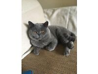 Chunky Solid Blue Male BSH