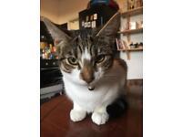 Kitten missing