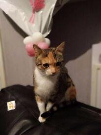 Female cat looking for loving forever home